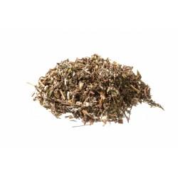 Artemisia Volgare